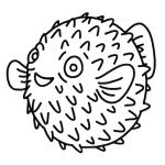 color blowfish